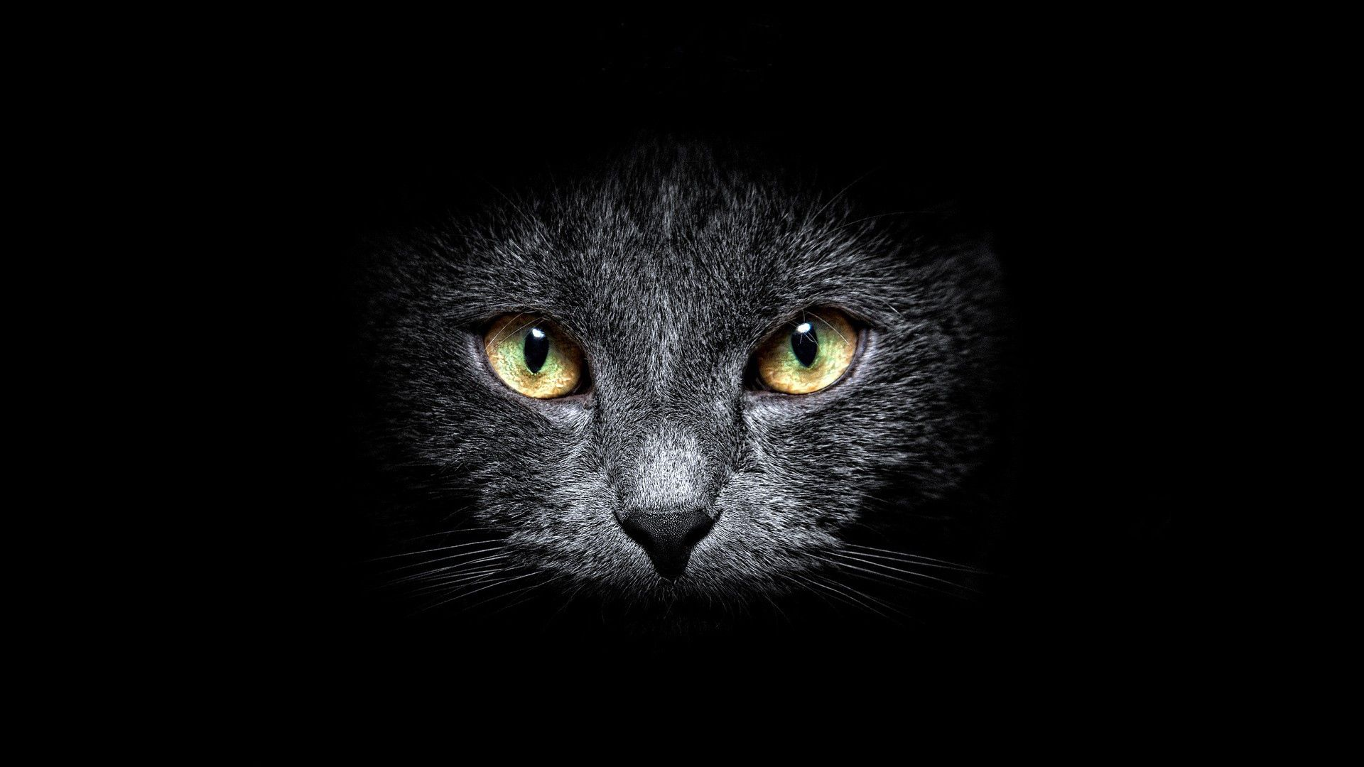 138791 download wallpaper Dark, Cat, Muzzle, Sight, Opinion, Black Background screensavers and pictures for free