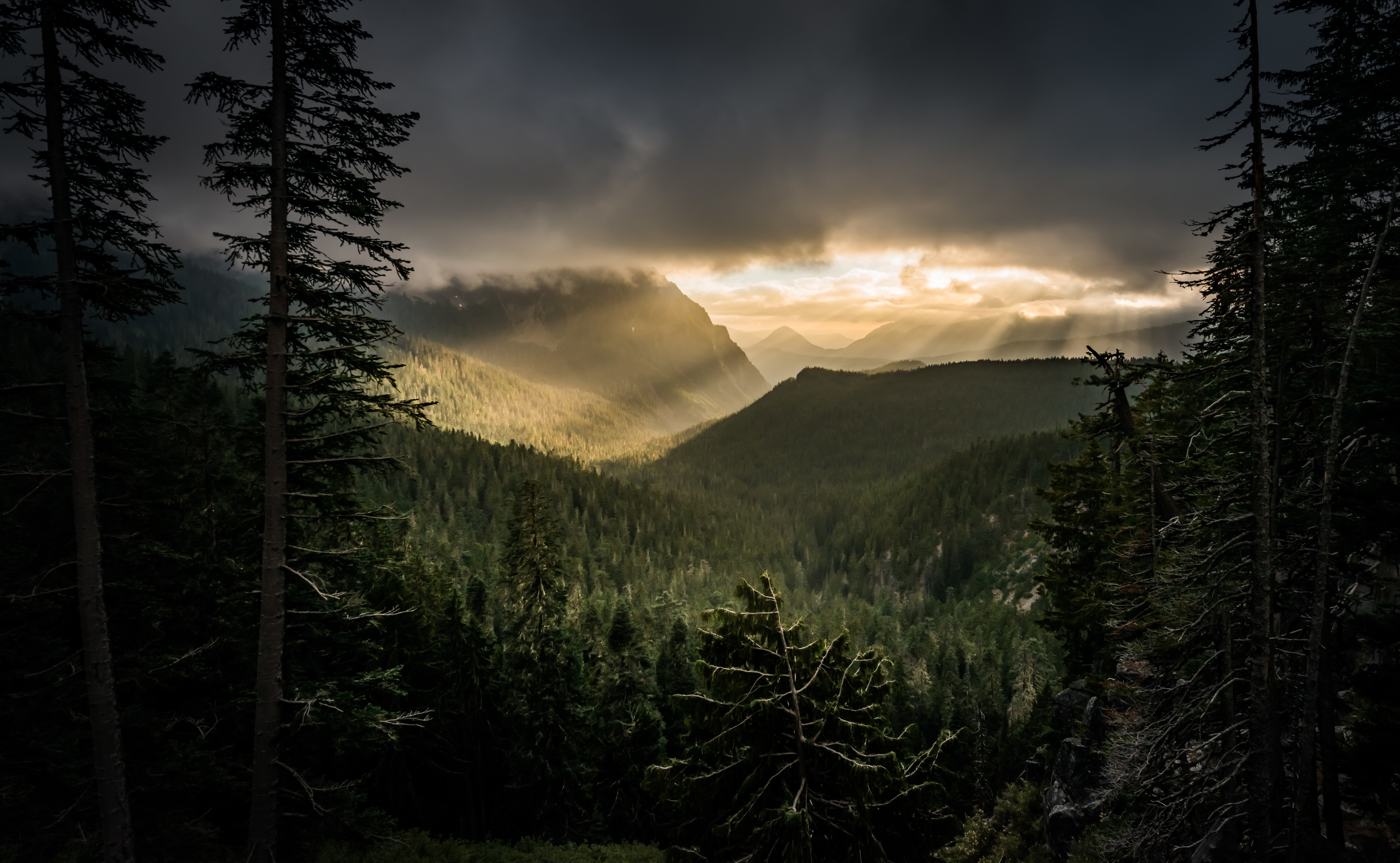 154033 Screensavers and Wallpapers Beams for phone. Download Nature, Mountains, Beams, Rays, Forest, Fog pictures for free