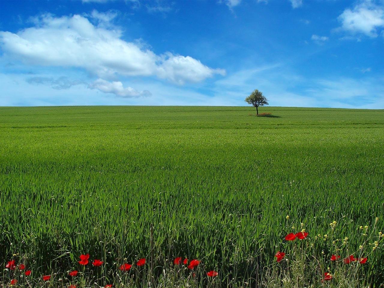 3474 скачать обои Пейзаж, Трава, Небо - заставки и картинки бесплатно