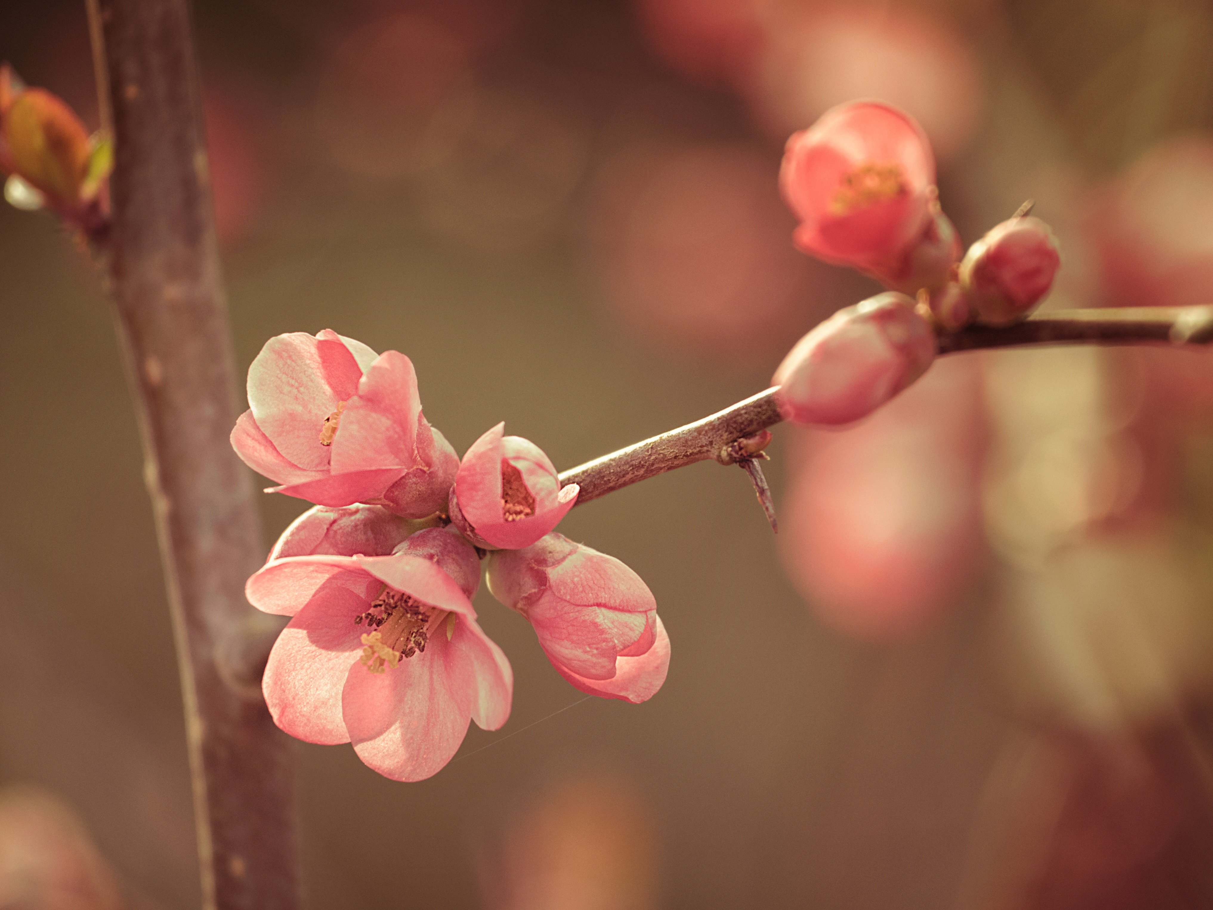 77055 Screensavers and Wallpapers Bloom for phone. Download Nature, Flower, Bloom, Flowering, Spring pictures for free
