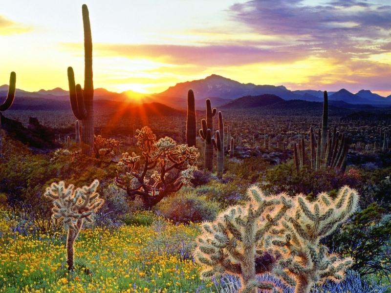 48417 descargar fondo de pantalla Paisaje, Naturaleza, Cactus: protectores de pantalla e imágenes gratis