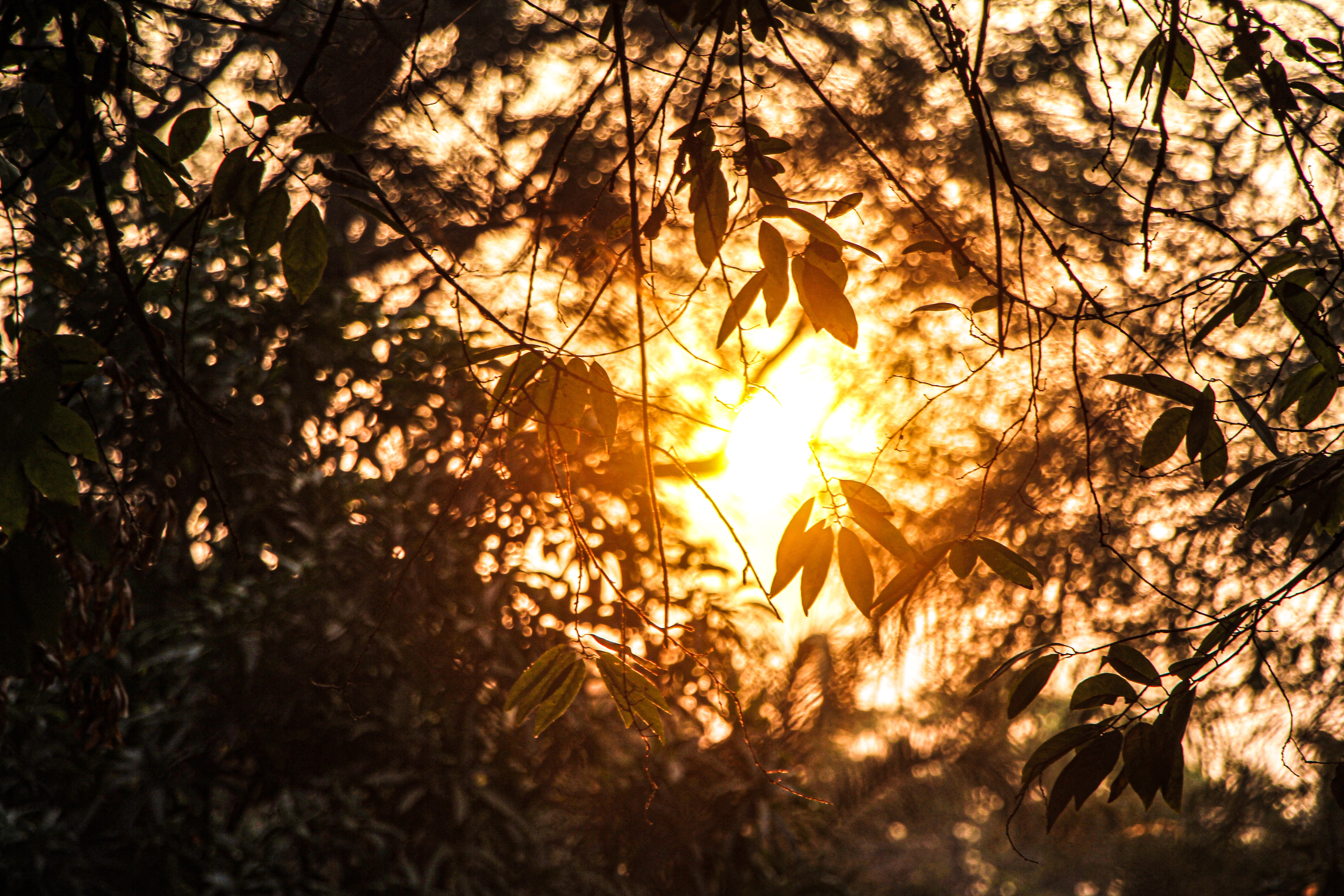 126311 download wallpaper Nature, Branches, Leaves, Sunlight, Summer screensavers and pictures for free