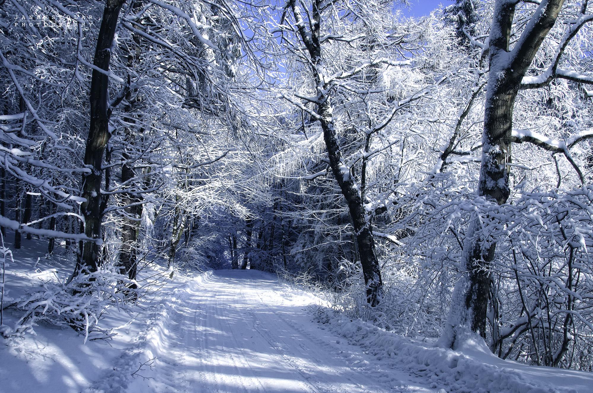 18659 скачать обои Пейзаж, Зима, Деревья, Дороги, Снег - заставки и картинки бесплатно
