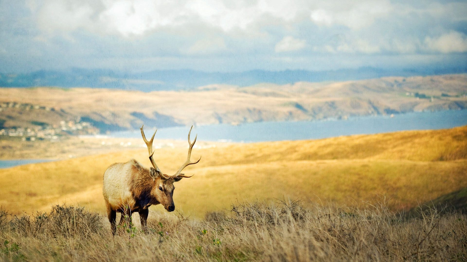 92729 download wallpaper Animals, Grass, Hills, Deer, Lake, Horns screensavers and pictures for free