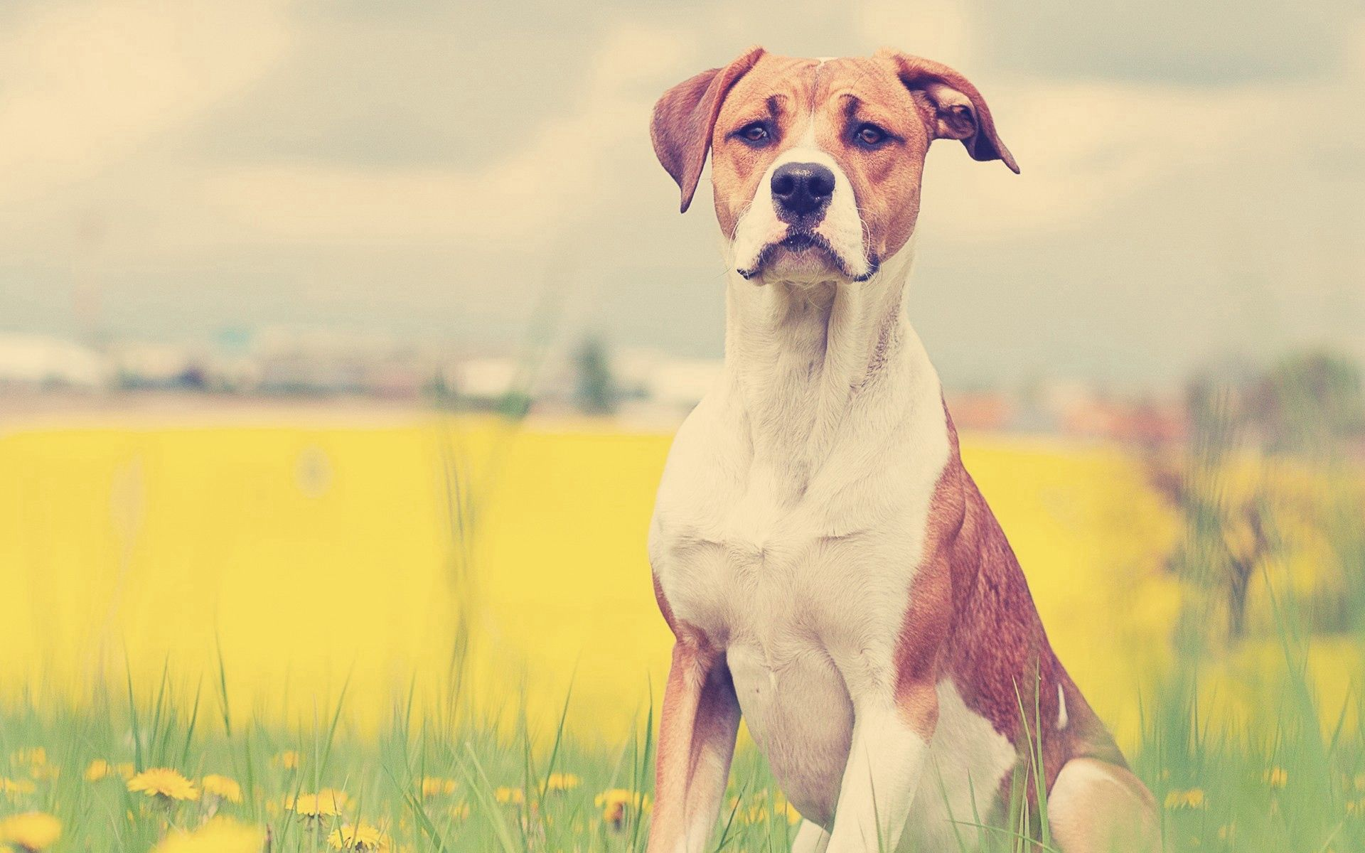 106559 download wallpaper Animals, Dog, Muzzle, Grass, Expectation, Waiting, Flowers screensavers and pictures for free