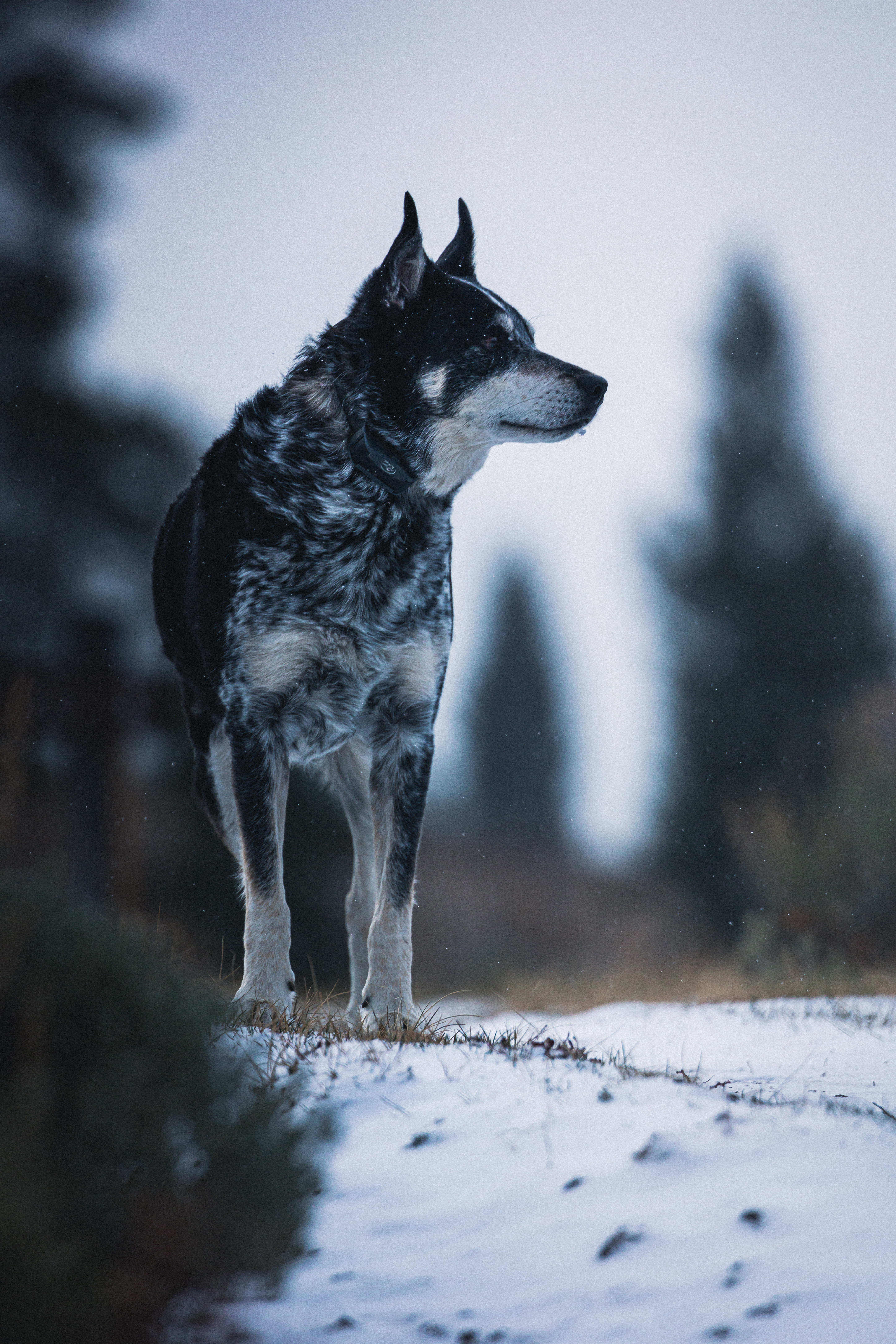 84199 Screensavers and Wallpapers Pet for phone. Download Animals, Dog, Nature, Snow, Pet, Sight, Opinion pictures for free