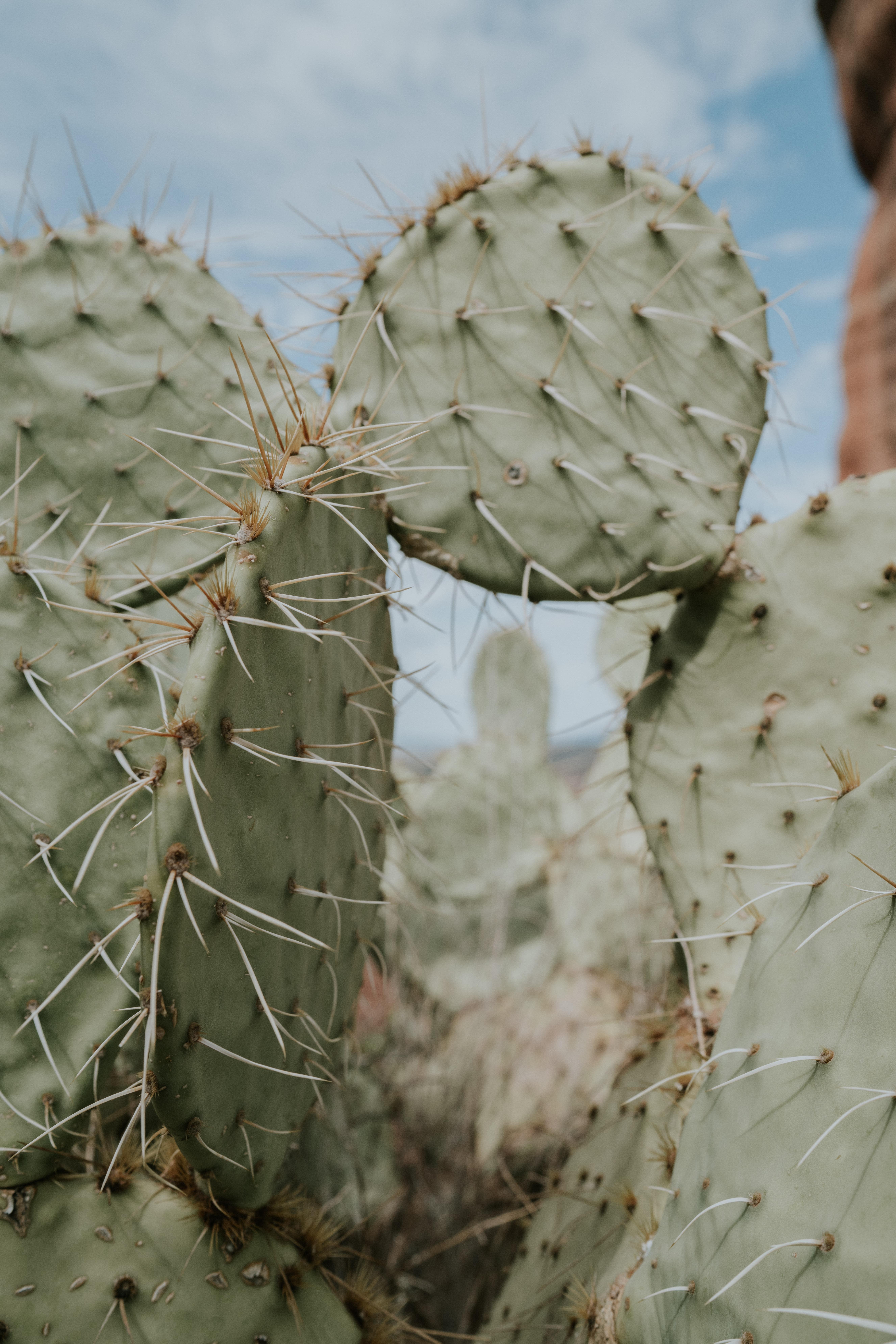 80739 descargar fondo de pantalla Flores, Cactus, Cacto, Espinas, Aguja, Punta De Lanza, Punzada: protectores de pantalla e imágenes gratis