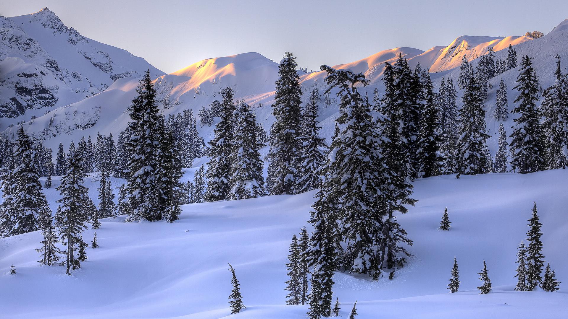 31304 скачать обои Пейзаж, Деревья, Горы, Снег - заставки и картинки бесплатно