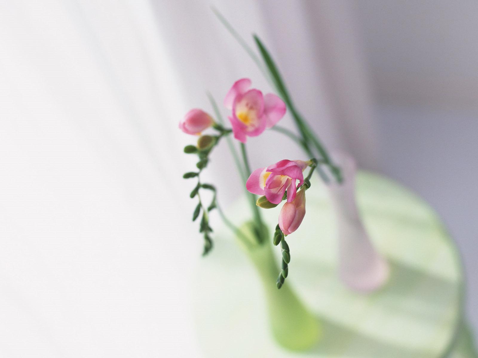 17308 скачать обои Растения, Цветы, Натюрморт - заставки и картинки бесплатно