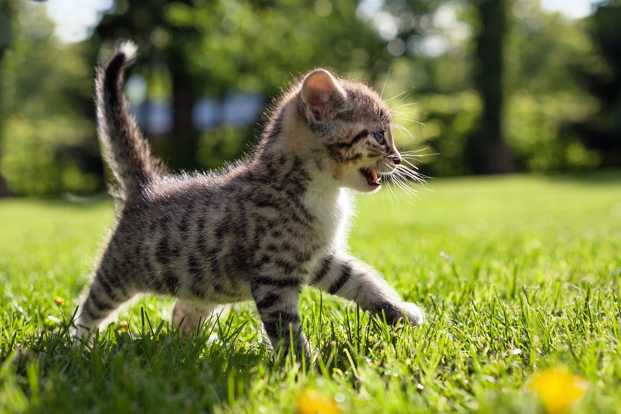 77870 Screensavers and Wallpapers Stroll for phone. Download Animals, Grass, Kitty, Kitten, Stroll, Kid, Tot pictures for free