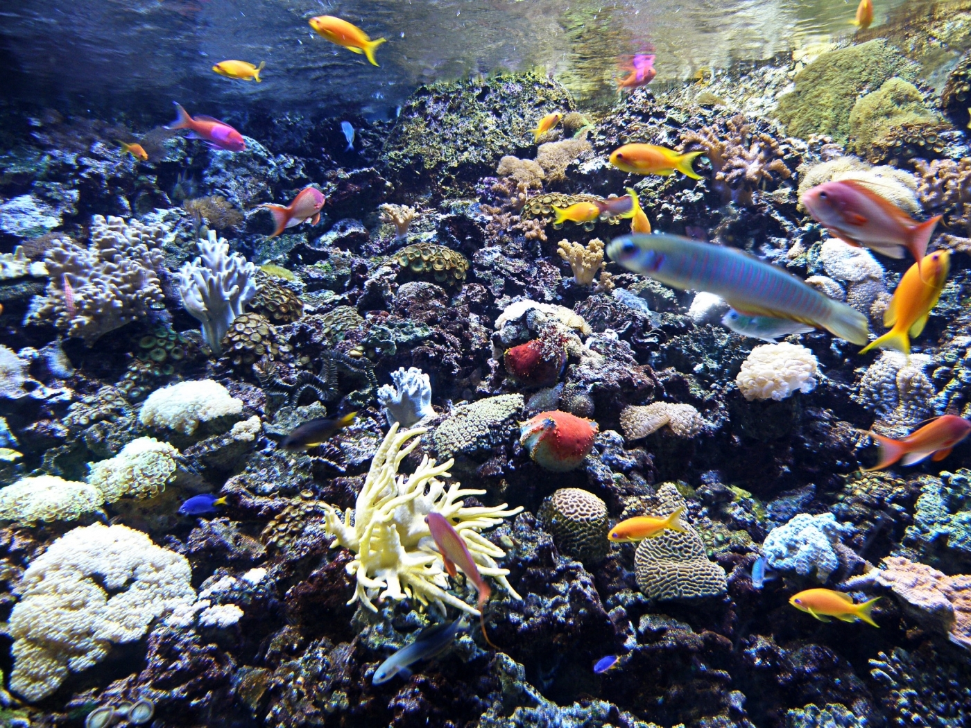 44329 download wallpaper Landscape, Sea, Fishes screensavers and pictures for free