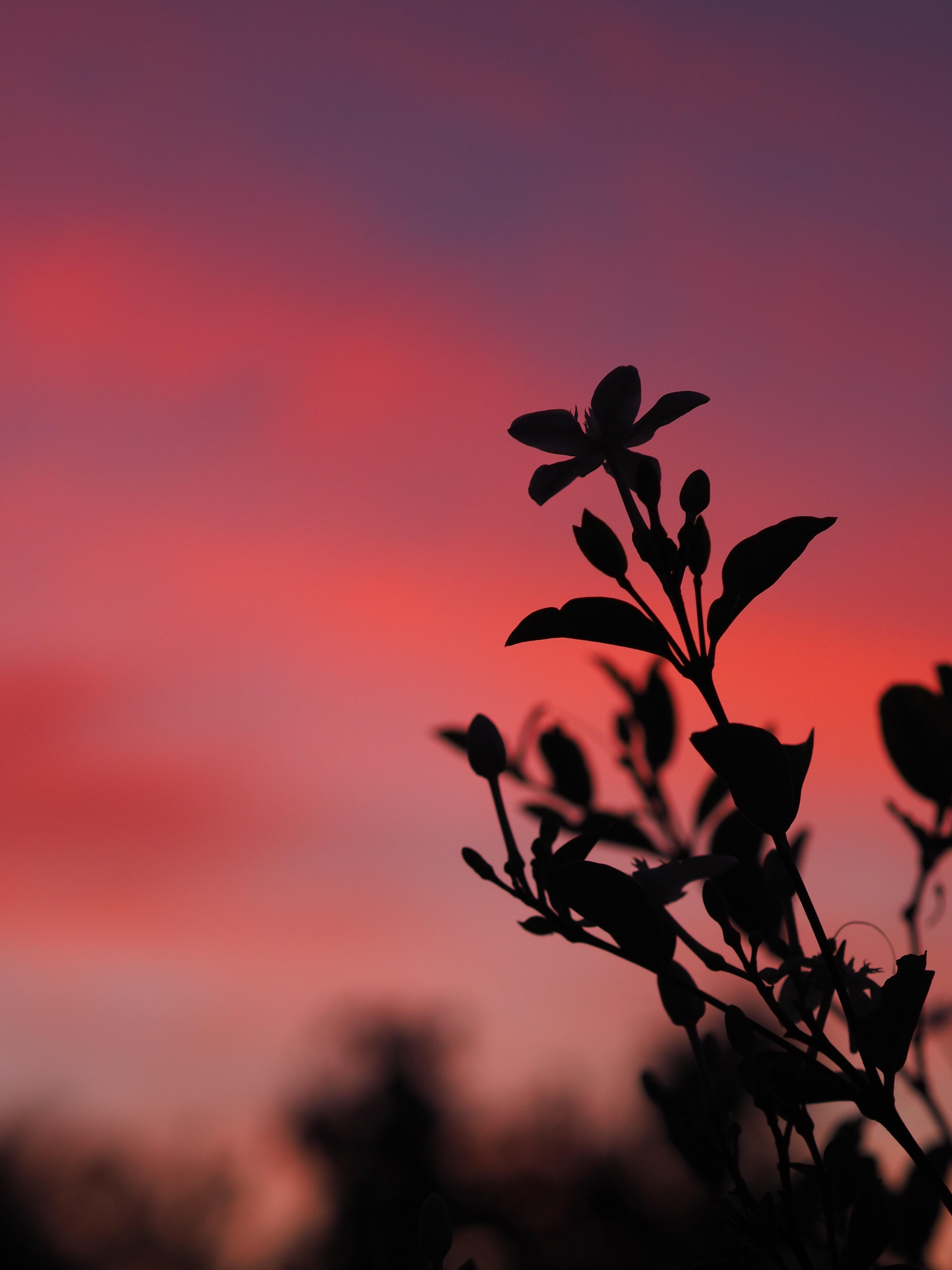 146583 скачать обои Темные, Растение, Листья, Ветка, Силуэт, Закат, Темный - заставки и картинки бесплатно