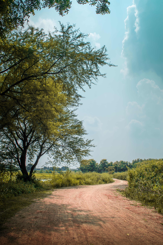 111910 descargar fondo de pantalla Camino, Naturaleza, Árboles, Arbusto, Turno, Giro: protectores de pantalla e imágenes gratis