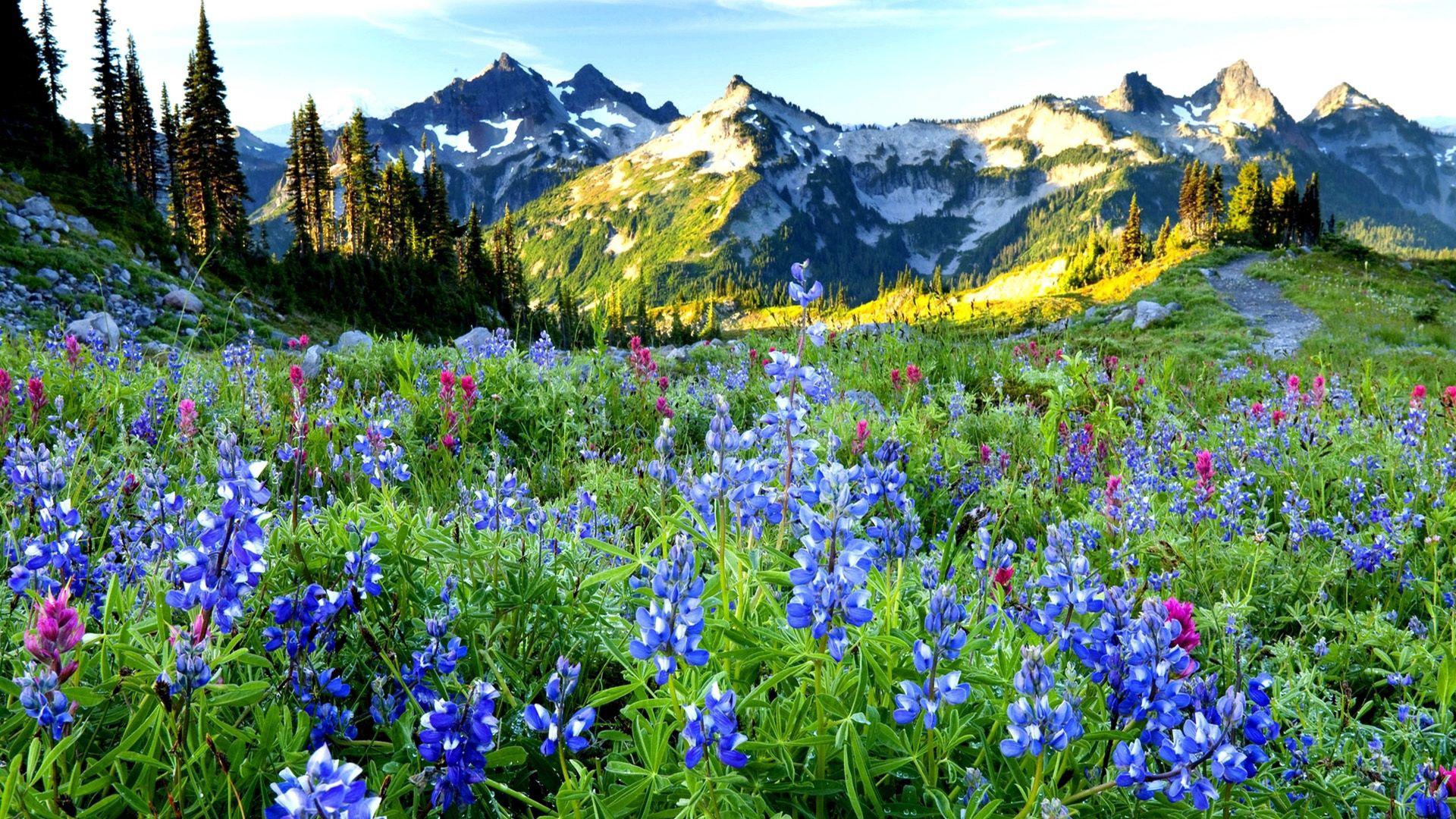 101756 économiseurs d'écran et fonds d'écran Montagnes sur votre téléphone. Téléchargez Montagnes, Nature, Fleurs, Sky, Dahl, Distance images gratuitement
