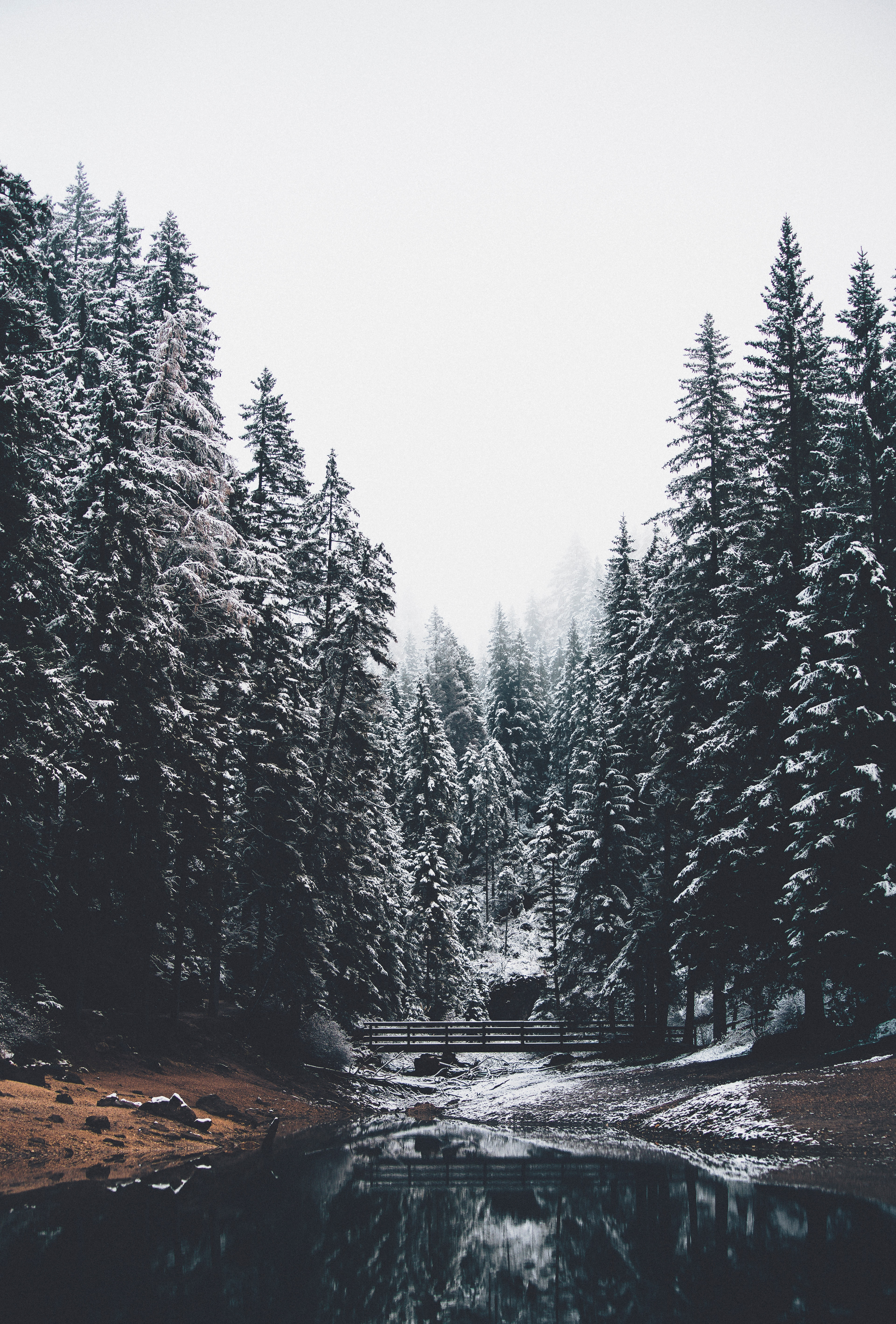 79929 free wallpaper 1080x2400 for phone, download images Landscape, Nature, Rivers, Pine, Snow, Forest, Bridge 1080x2400 for mobile