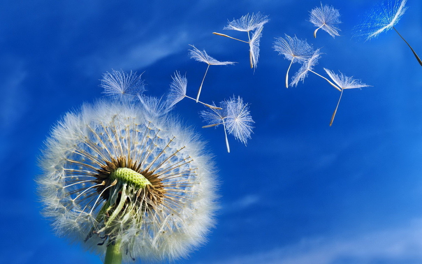 19507 download wallpaper Background, Plants, Flowers, Sky, Dandelions screensavers and pictures for free