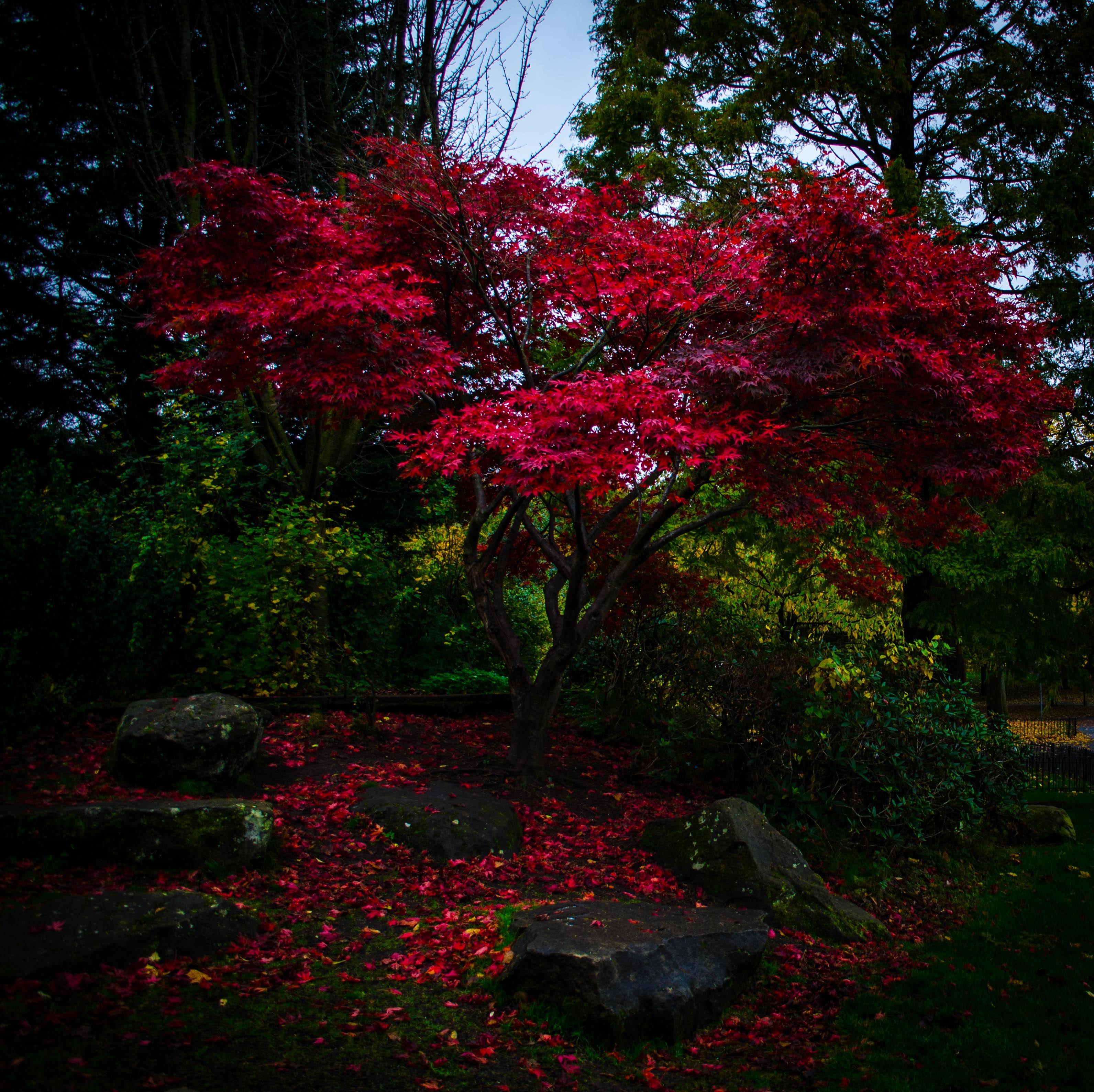 141461 скачать обои Деревья, Осень, Парк, Листья, Природа, Вечер - заставки и картинки бесплатно