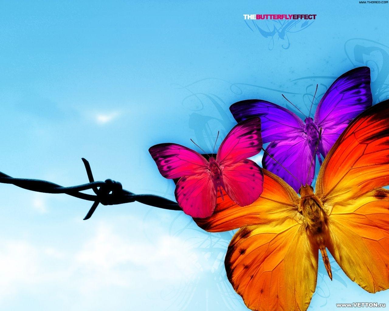 2885 скачать обои Бабочки, Насекомые - заставки и картинки бесплатно