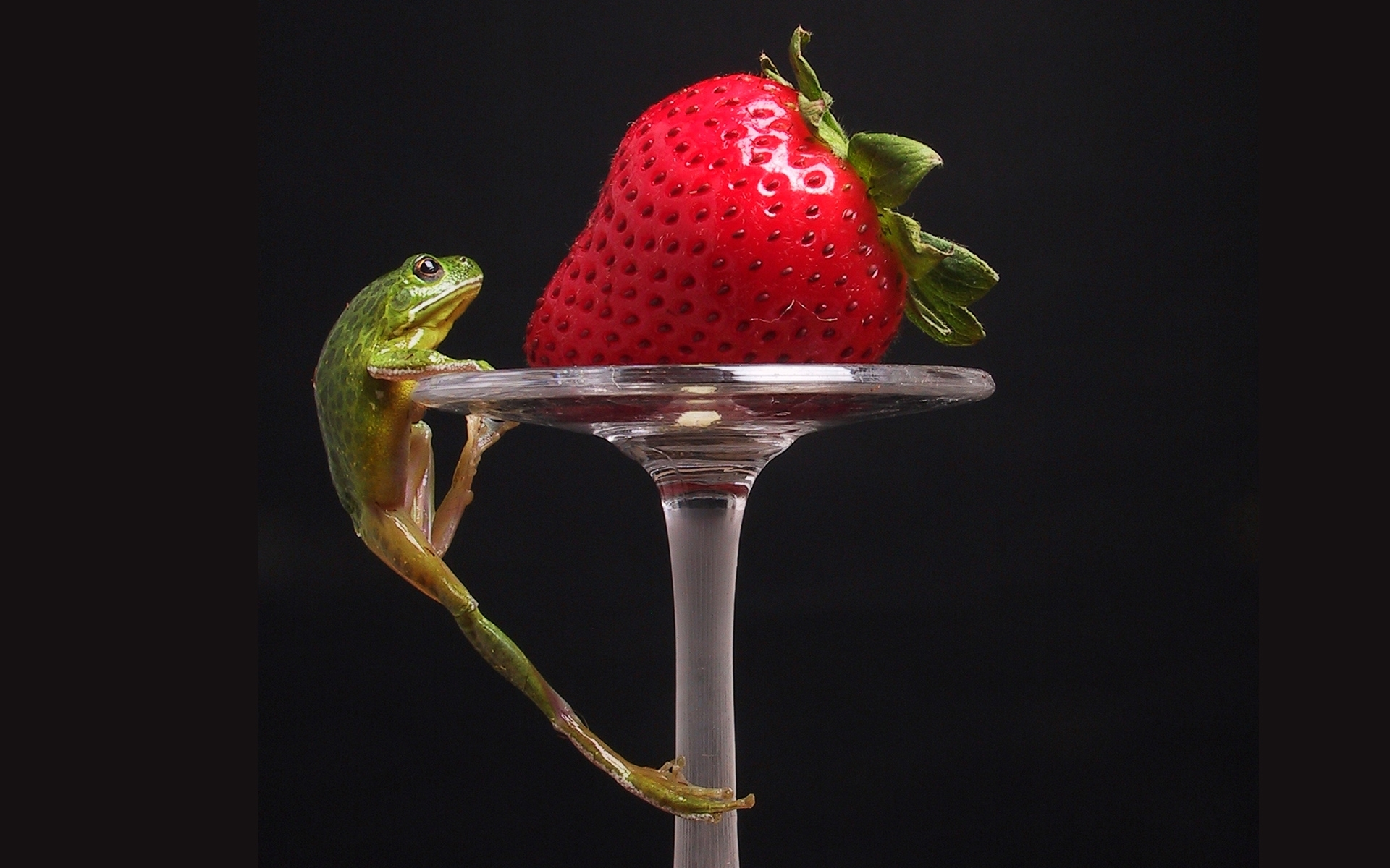 2504 download wallpaper Animals, Fruits, Food, Strawberry, Frogs, Berries screensavers and pictures for free