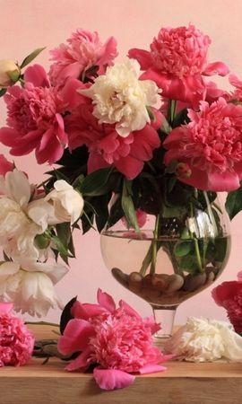 48133 télécharger le fond d'écran Plantes, Fleurs, Bouquets - économiseurs d'écran et images gratuitement