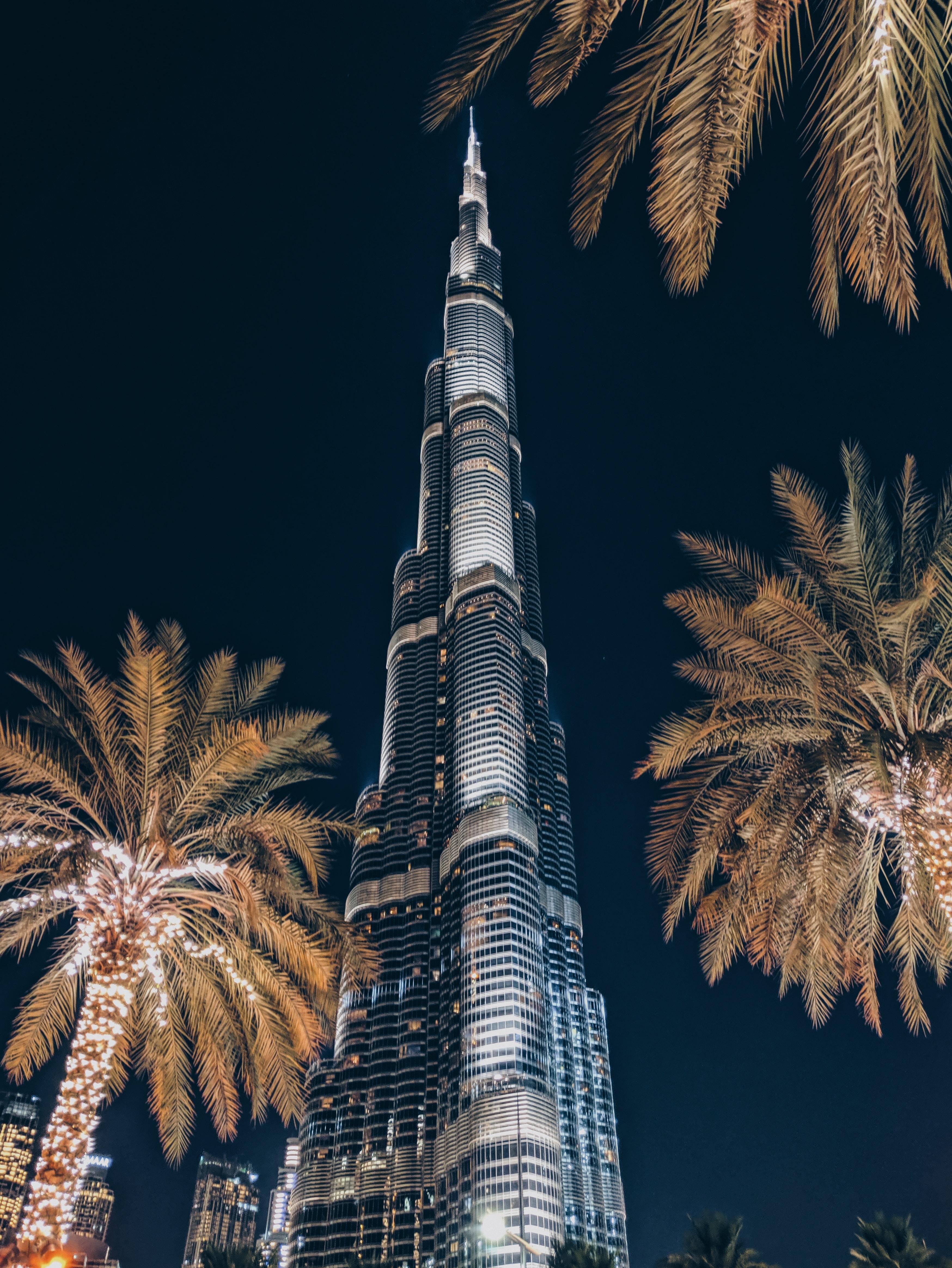 54960 скачать обои Пальмы, Города, Архитектура, Небоскреб, Здание, Башня - заставки и картинки бесплатно