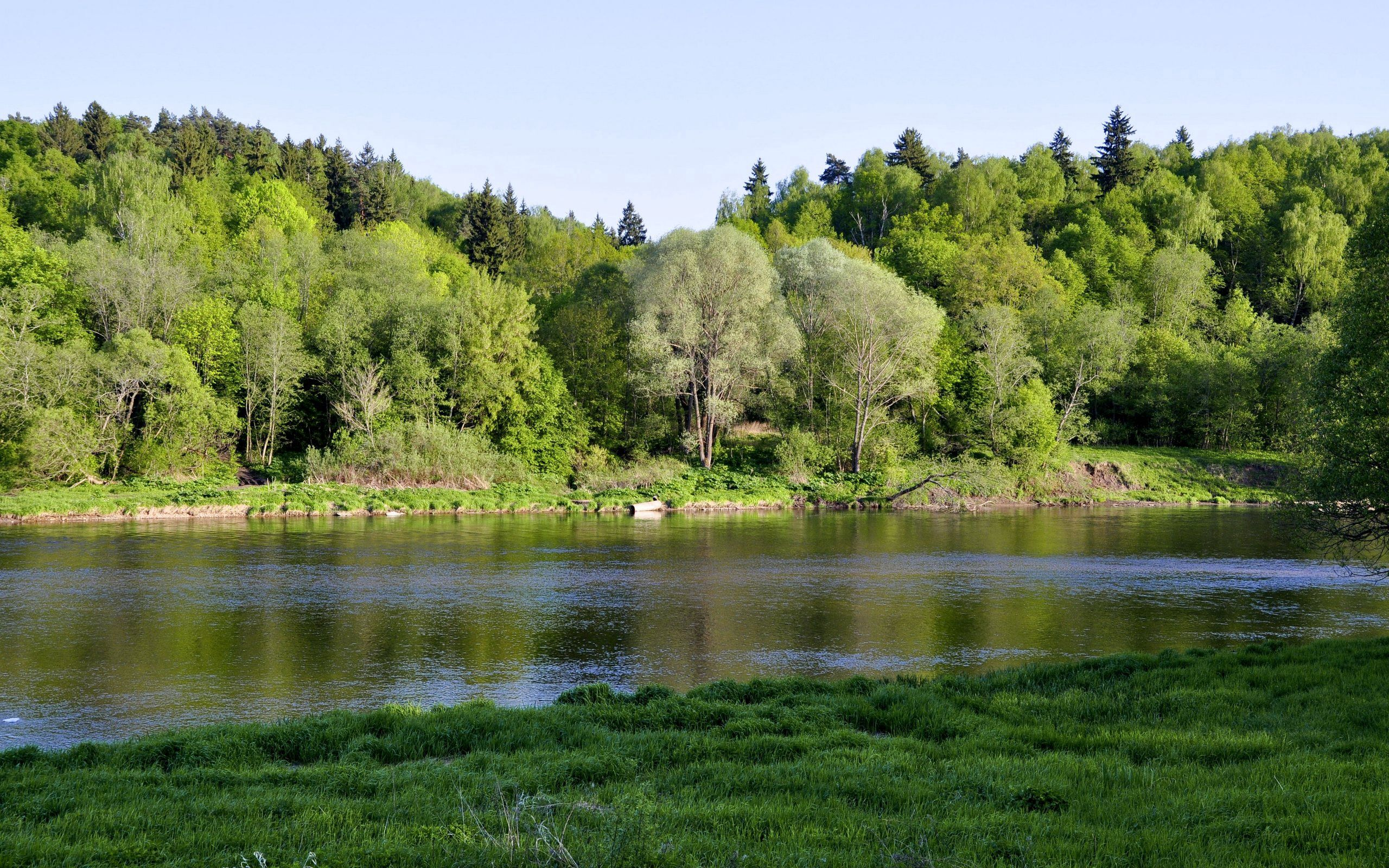 59189 download wallpaper Nature, Rivers, Trees, Grass, Shore, Bank screensavers and pictures for free