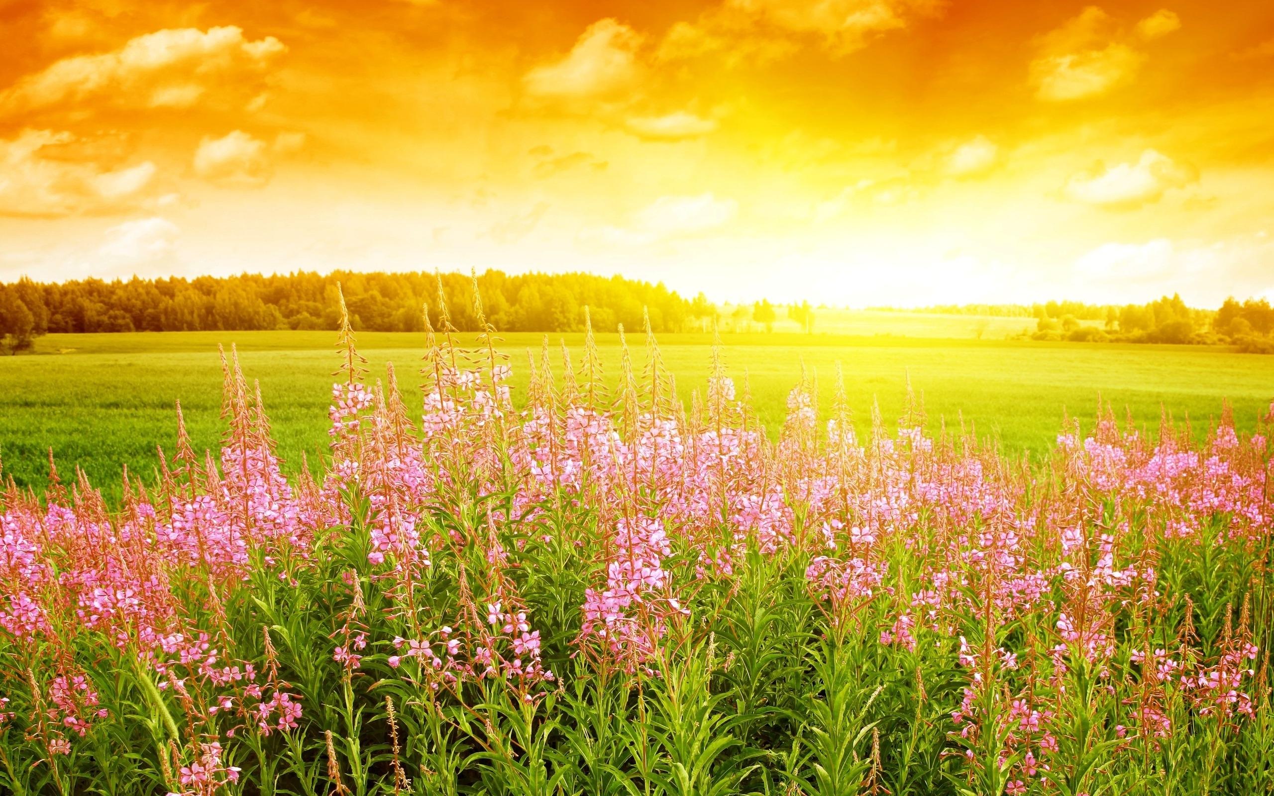 46047 скачать Желтые обои на телефон бесплатно, Пейзаж, Природа, Поля Желтые картинки и заставки на мобильный