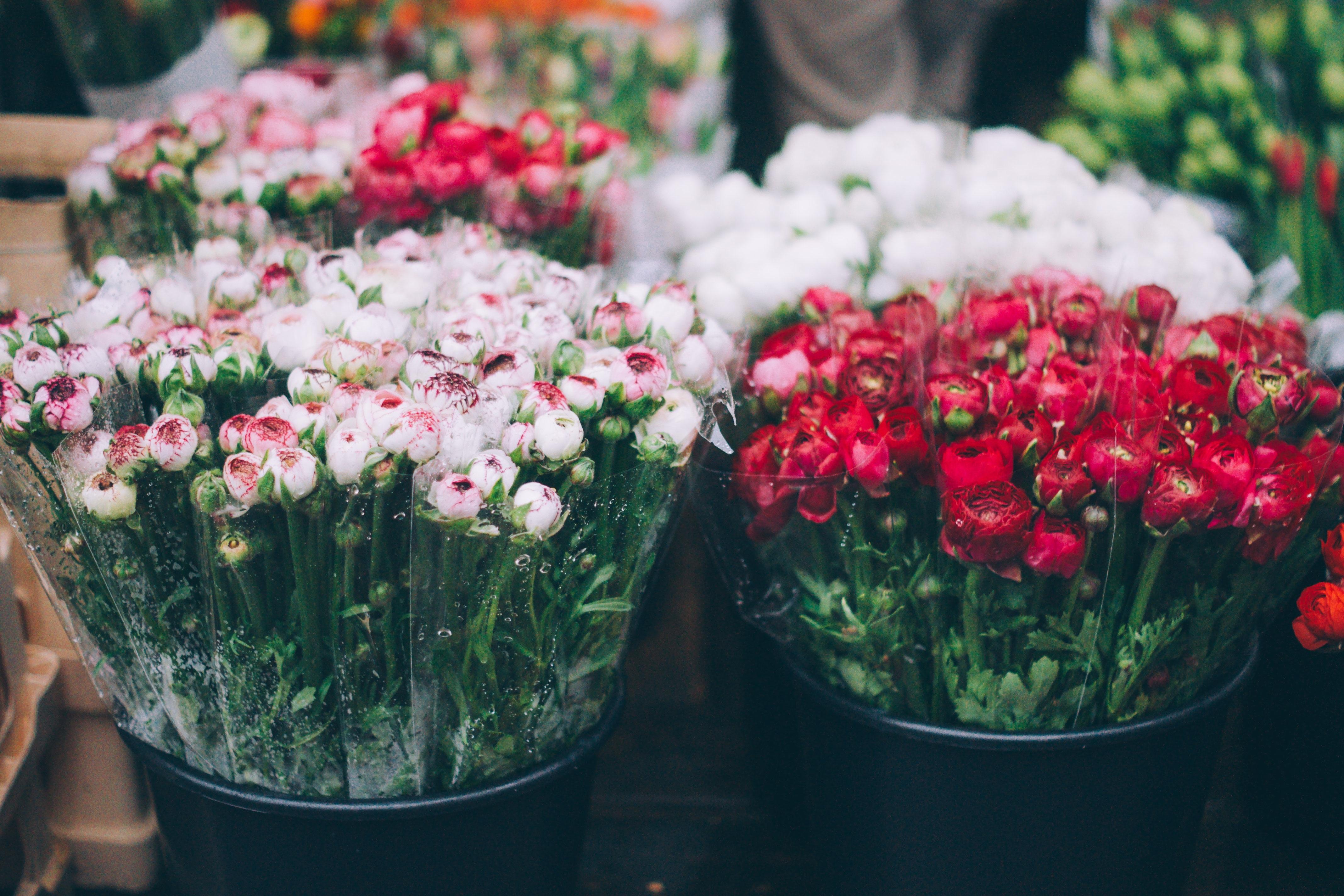 104214 télécharger le fond d'écran Fleurs, Flou, Lisse, Bouquets - économiseurs d'écran et images gratuitement