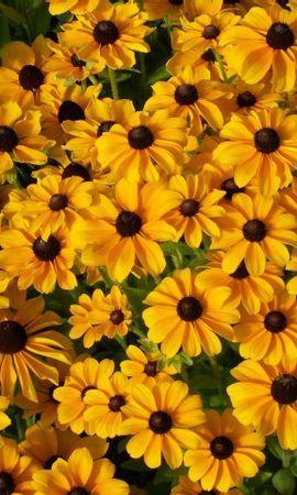 10234 скачать обои Растения, Цветы, Фон - заставки и картинки бесплатно