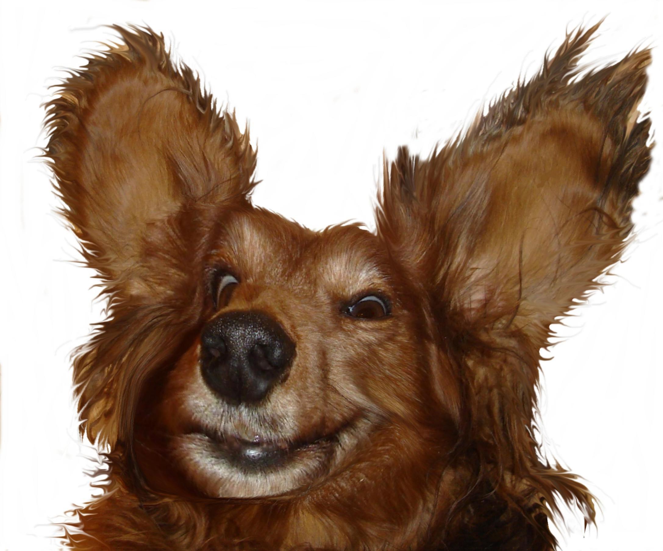 22542 скачать обои Животные, Собаки - заставки и картинки бесплатно