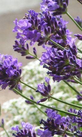 41836 Salvapantallas y fondos de pantalla Insectos en tu teléfono. Descarga imágenes de Paisaje, Naturaleza, Mariposas, Flores, Insectos gratis