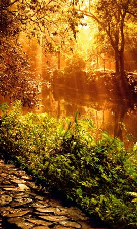 2711 descargar fondo de pantalla Plantas, Paisaje, Agua, Ríos: protectores de pantalla e imágenes gratis