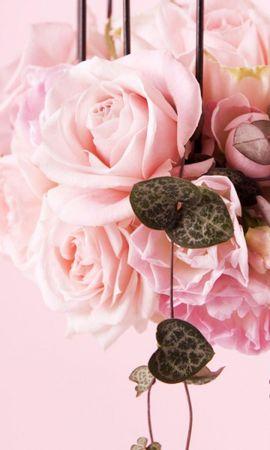 40173 скачать обои Растения, Цветы, Розы - заставки и картинки бесплатно