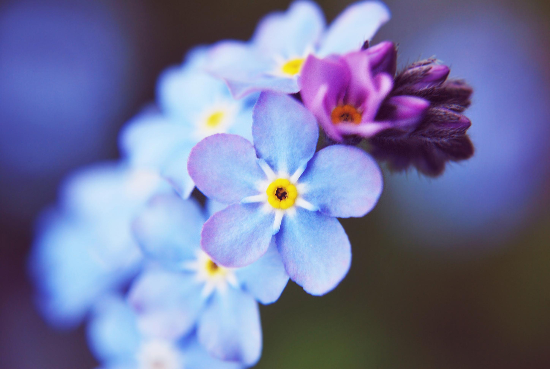 21033 скачать обои Растения, Цветы - заставки и картинки бесплатно