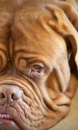 6843 download wallpaper Animals, Dogs screensavers and pictures for free