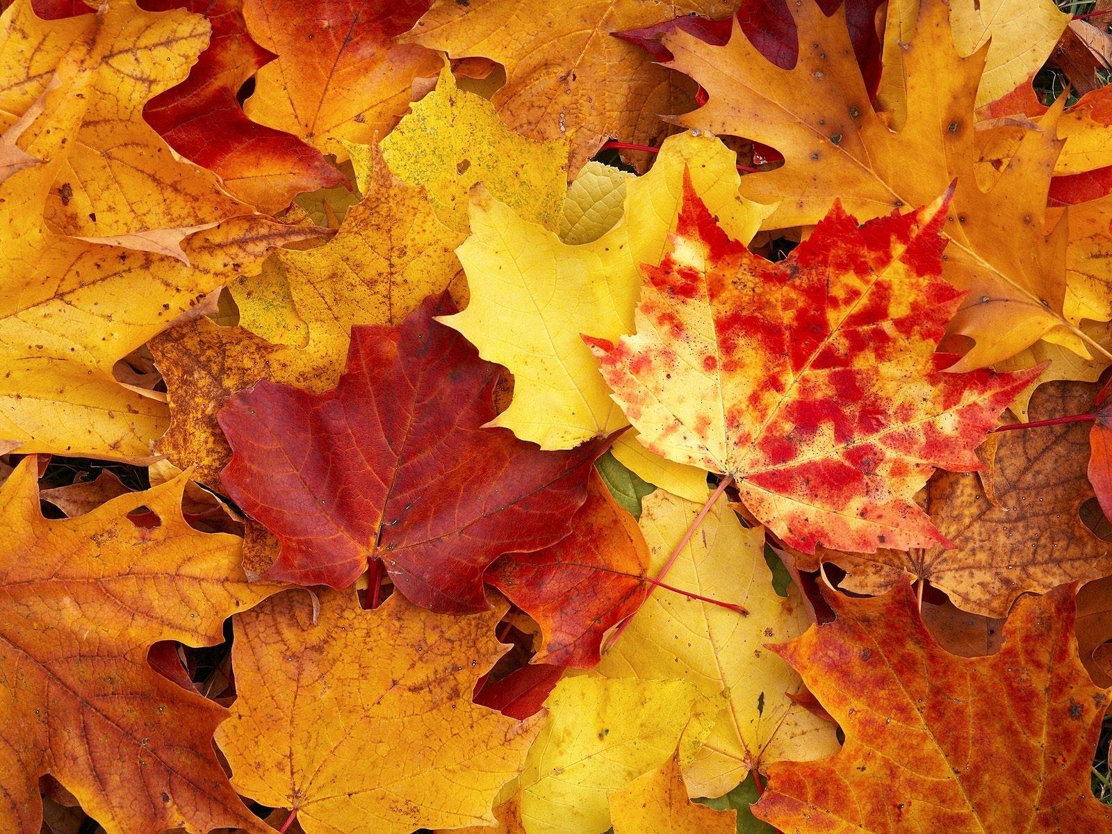 6438 скачать обои Фон, Осень, Листья - заставки и картинки бесплатно