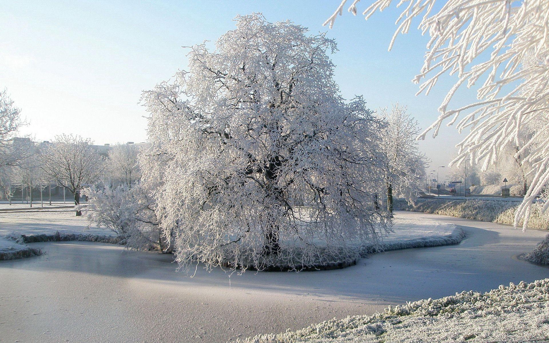 136795 скачать обои Природа, Дерево, Иней, Пруд, Мерзлый, Лед, Поверхность, Зима, Ива - заставки и картинки бесплатно