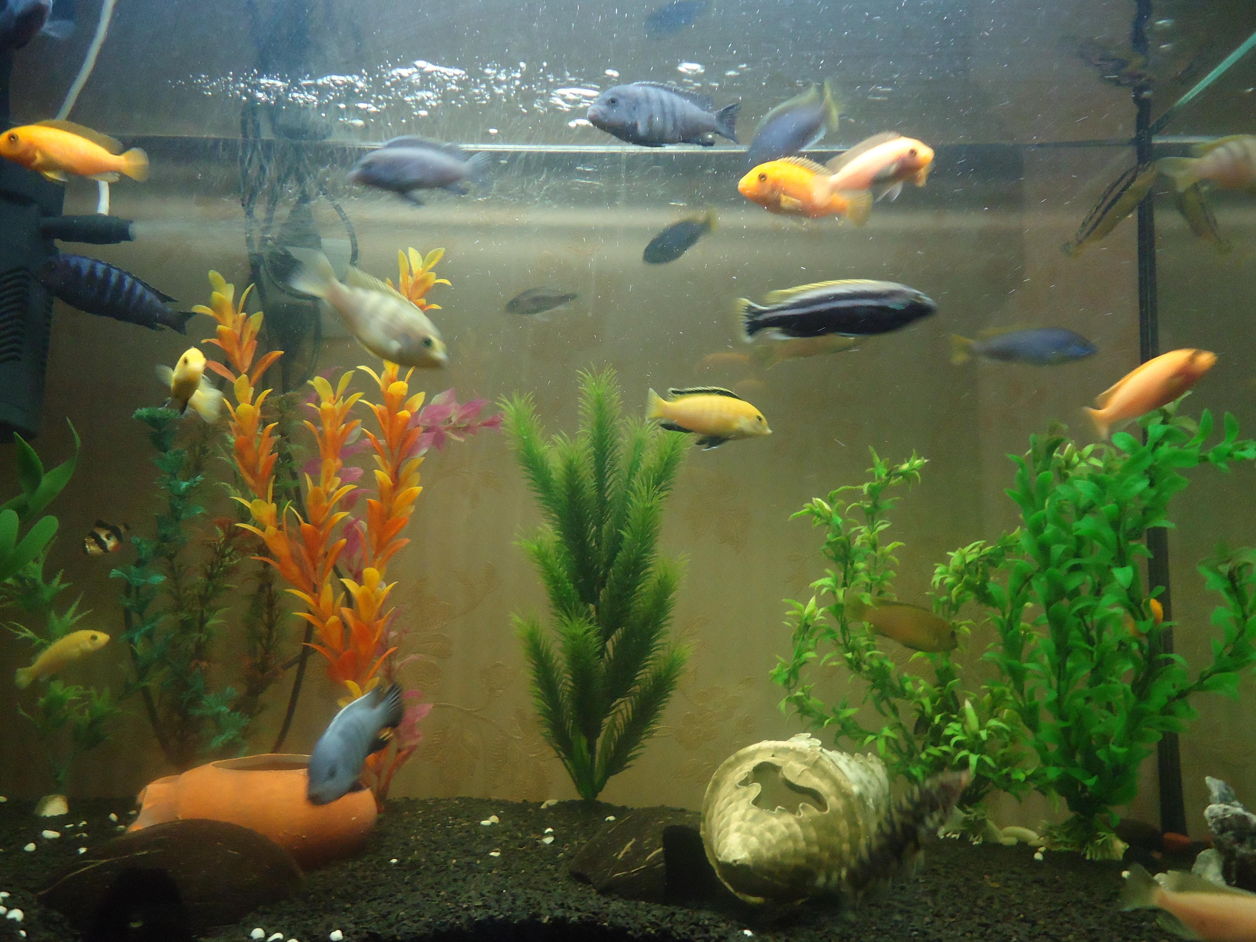 18152 Заставки и Обои Рыбы на телефон. Скачать Рыбы, Животные картинки бесплатно