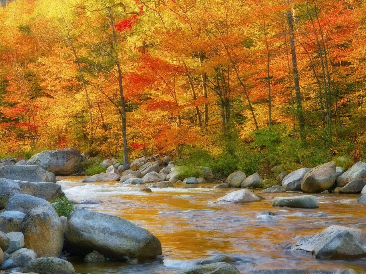 27309 download wallpaper Landscape, Rivers, Trees, Autumn screensavers and pictures for free