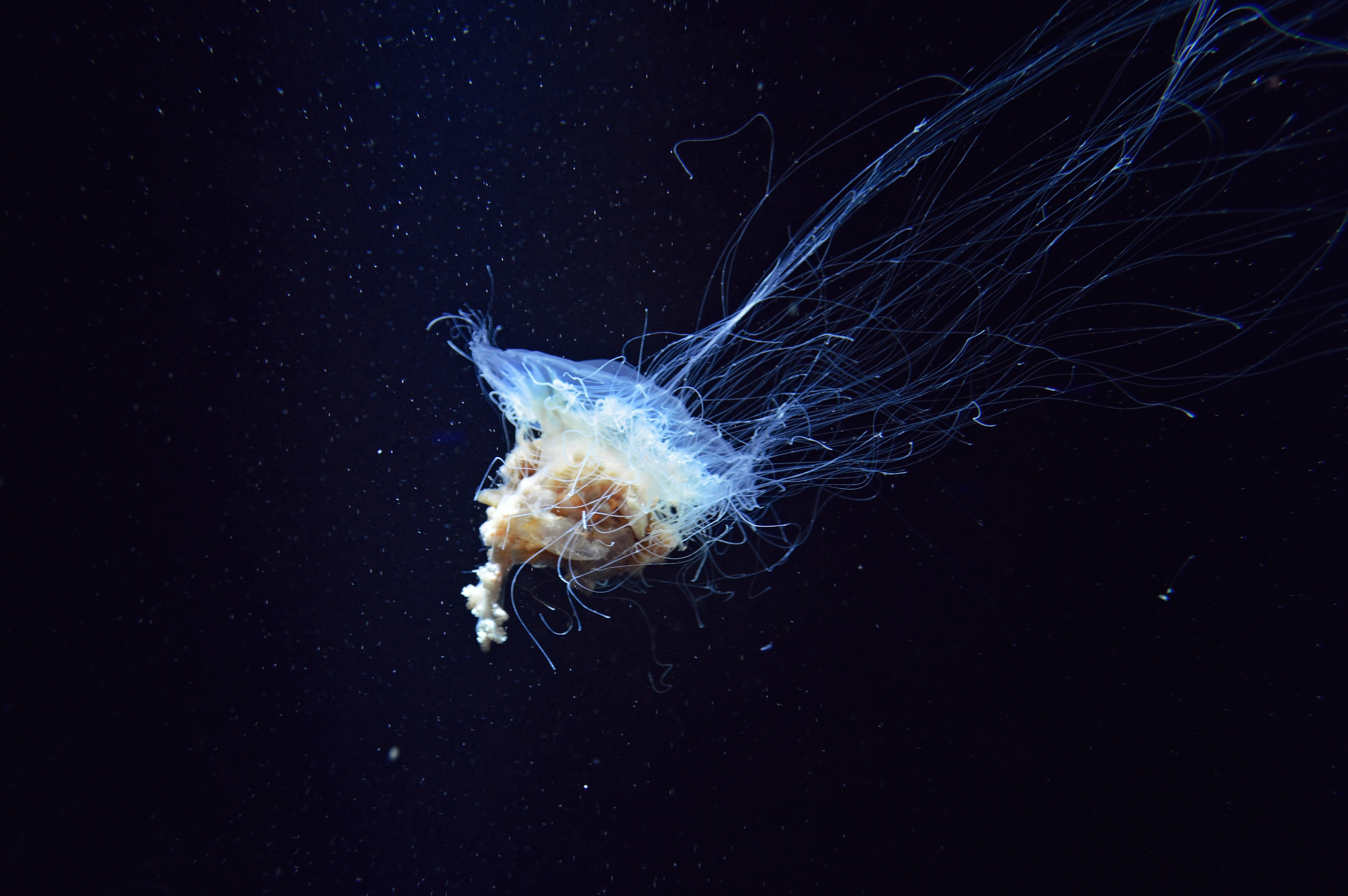 56526 download wallpaper Nature, Jellyfish, Tentacles, Underwater World screensavers and pictures for free