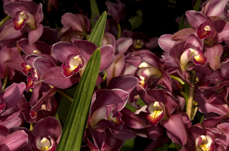 152026 скачать обои Цветы, Листья, Крупный План, Много, Орхидеи - заставки и картинки бесплатно