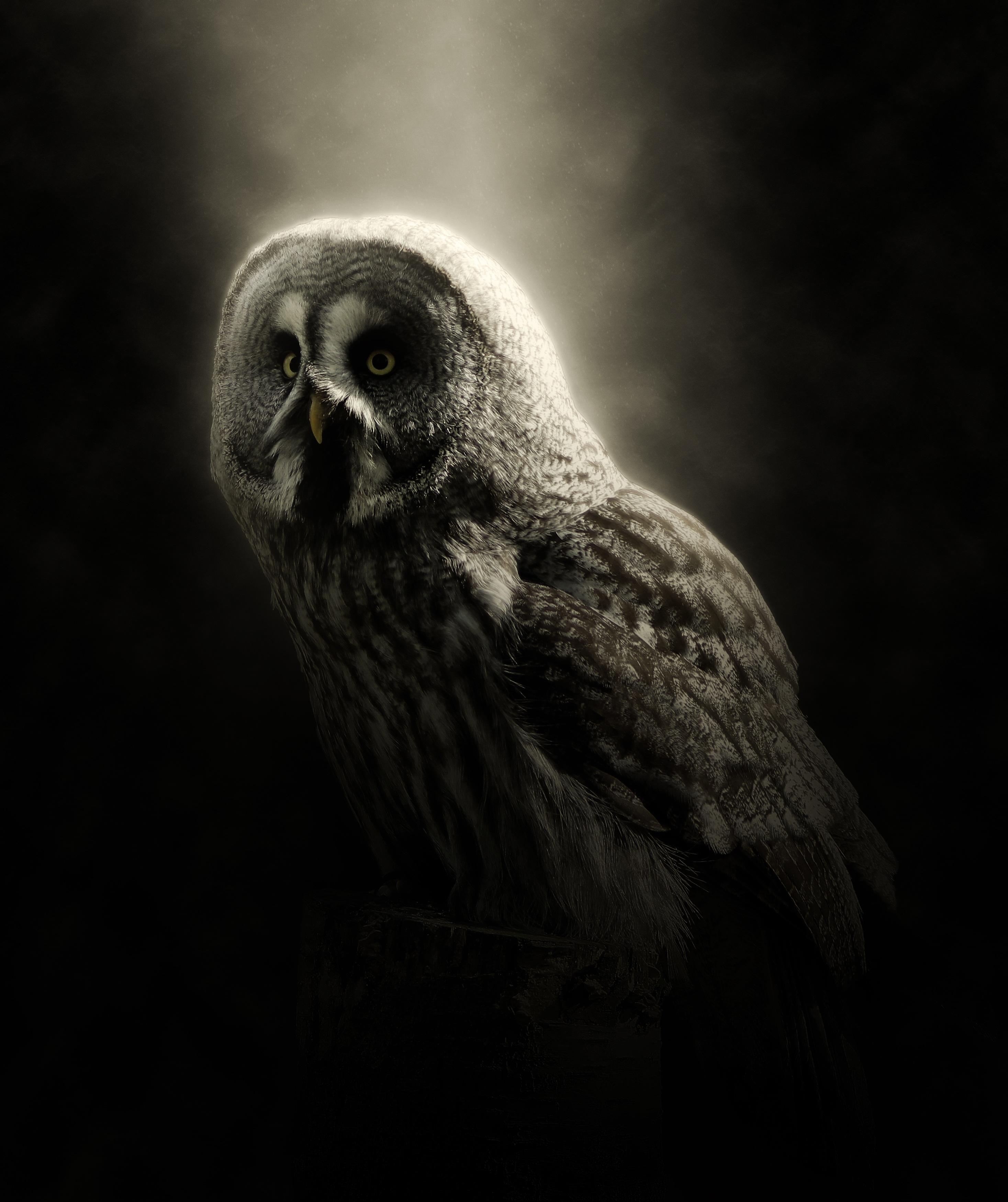 154195 download wallpaper Animals, Owl, Bird, Predator, Dark, Wildlife screensavers and pictures for free