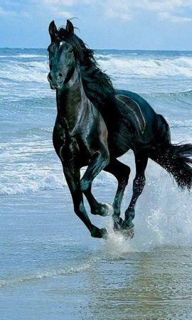 23964 download wallpaper Animals, Horses, Sea, Waves screensavers and pictures for free