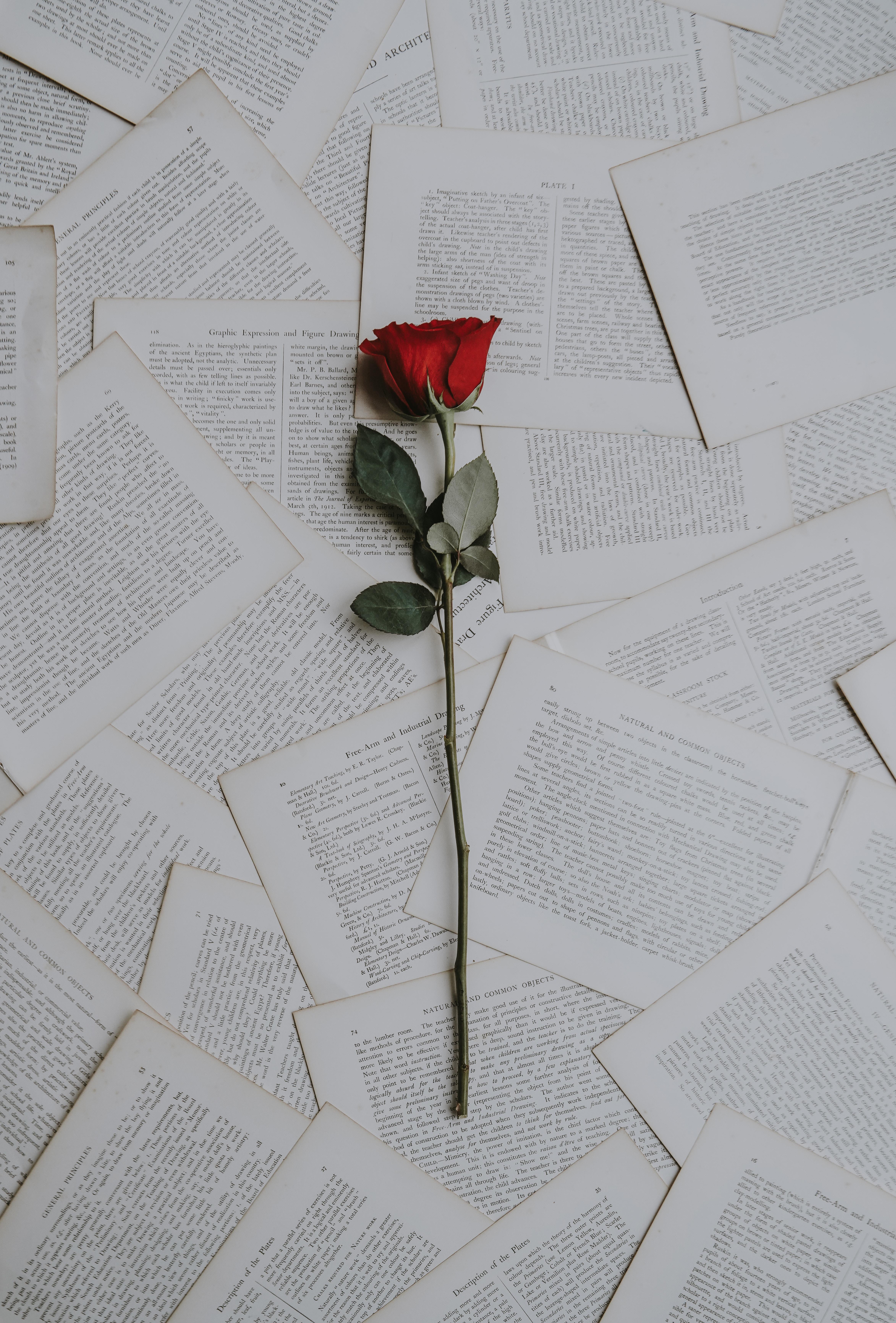 76569 скачать обои Цветы, Роза, Книги, Тексты - заставки и картинки бесплатно