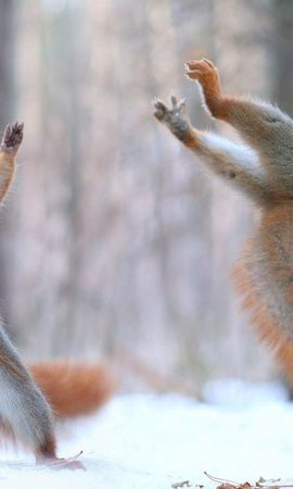 144961 download wallpaper Animals, Squirrel, Cones, Snow, Funny screensavers and pictures for free