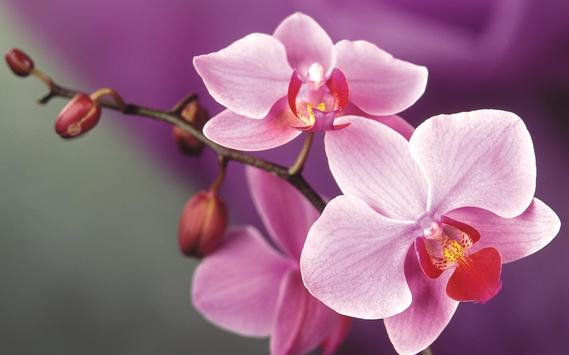 26046 скачать обои Растения, Цветы - заставки и картинки бесплатно