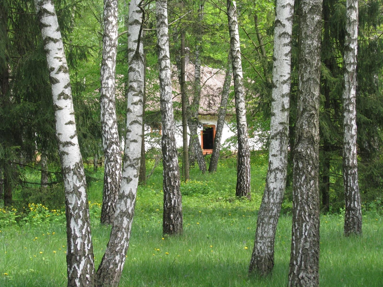5466 скачать обои Пейзаж, Деревья - заставки и картинки бесплатно