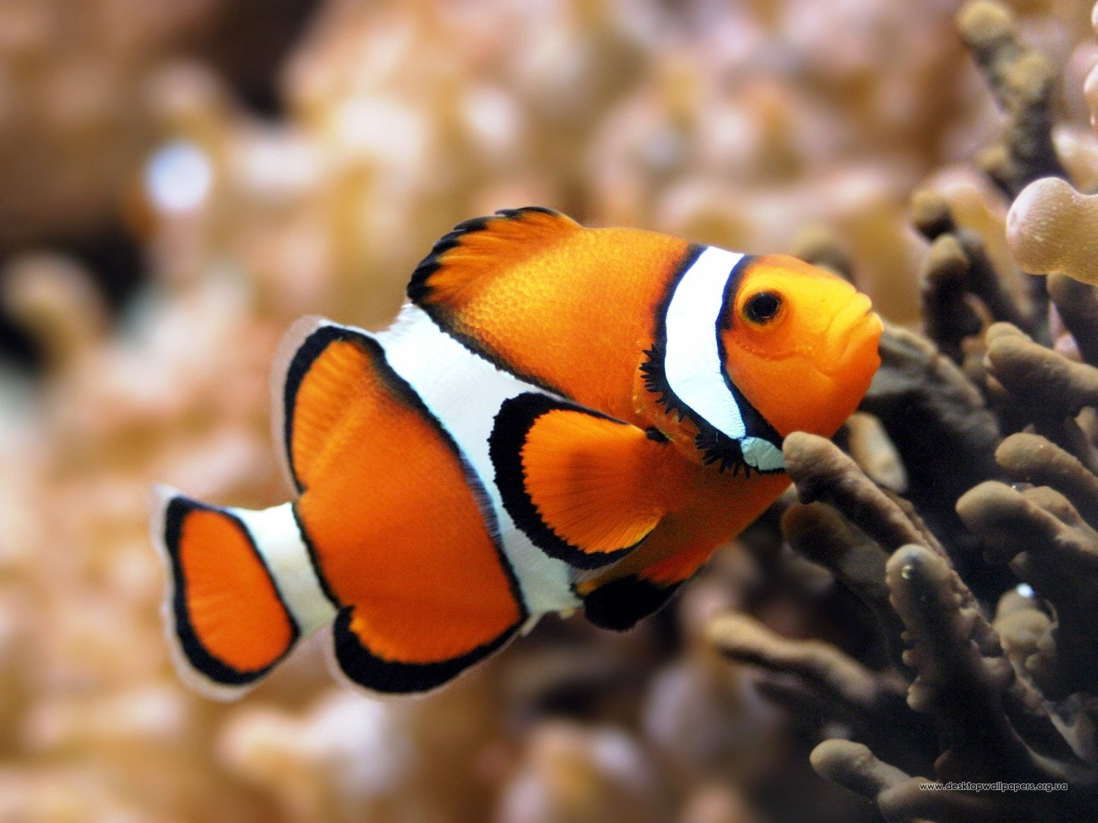 6504 download wallpaper Animals, Fishes screensavers and pictures for free