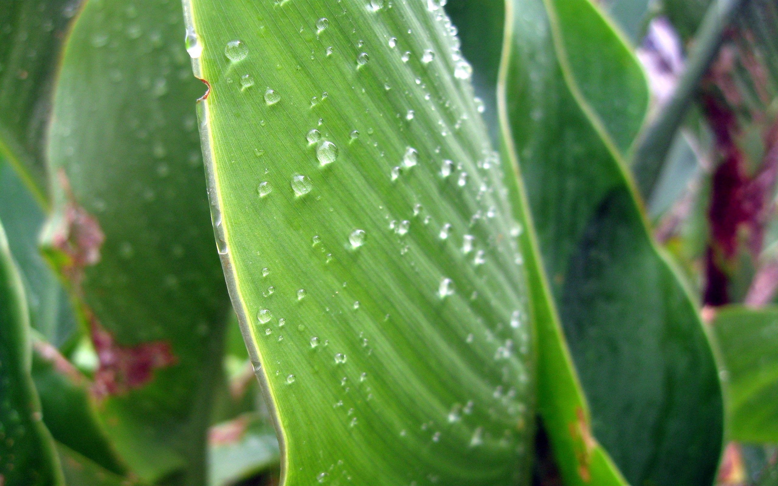 103065 download wallpaper Macro, Plant, Drops, Surface, Dew screensavers and pictures for free