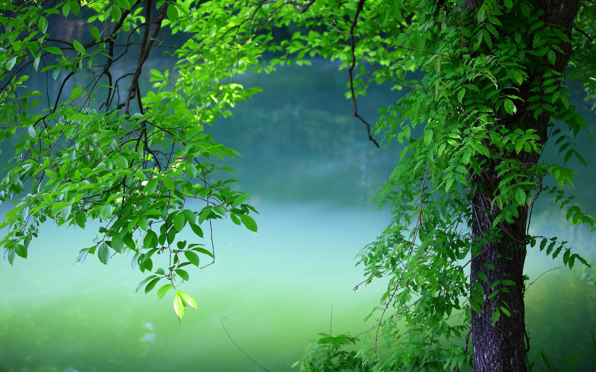 78993 Screensavers and Wallpapers Summer for phone. Download Nature, Leaves, Summer, Wood, Tree pictures for free
